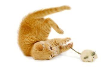 mint cat toys