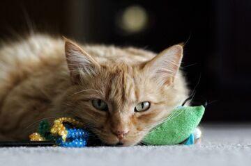 игрушки для кошек с мятой