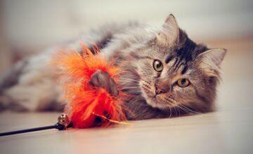 кошачьи игрушки-дразнилки